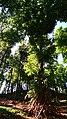 Simple tree house.jpg
