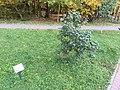 Sirenevyi bulvar Troitsk 2414 (30769739977).jpg