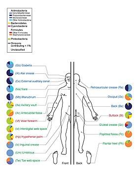 Human Microbiome - Wikipedia