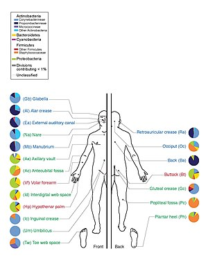 Human microbiota - Graphic depicting the human skin microbiota, with relative prevalences of various classes of bacteria