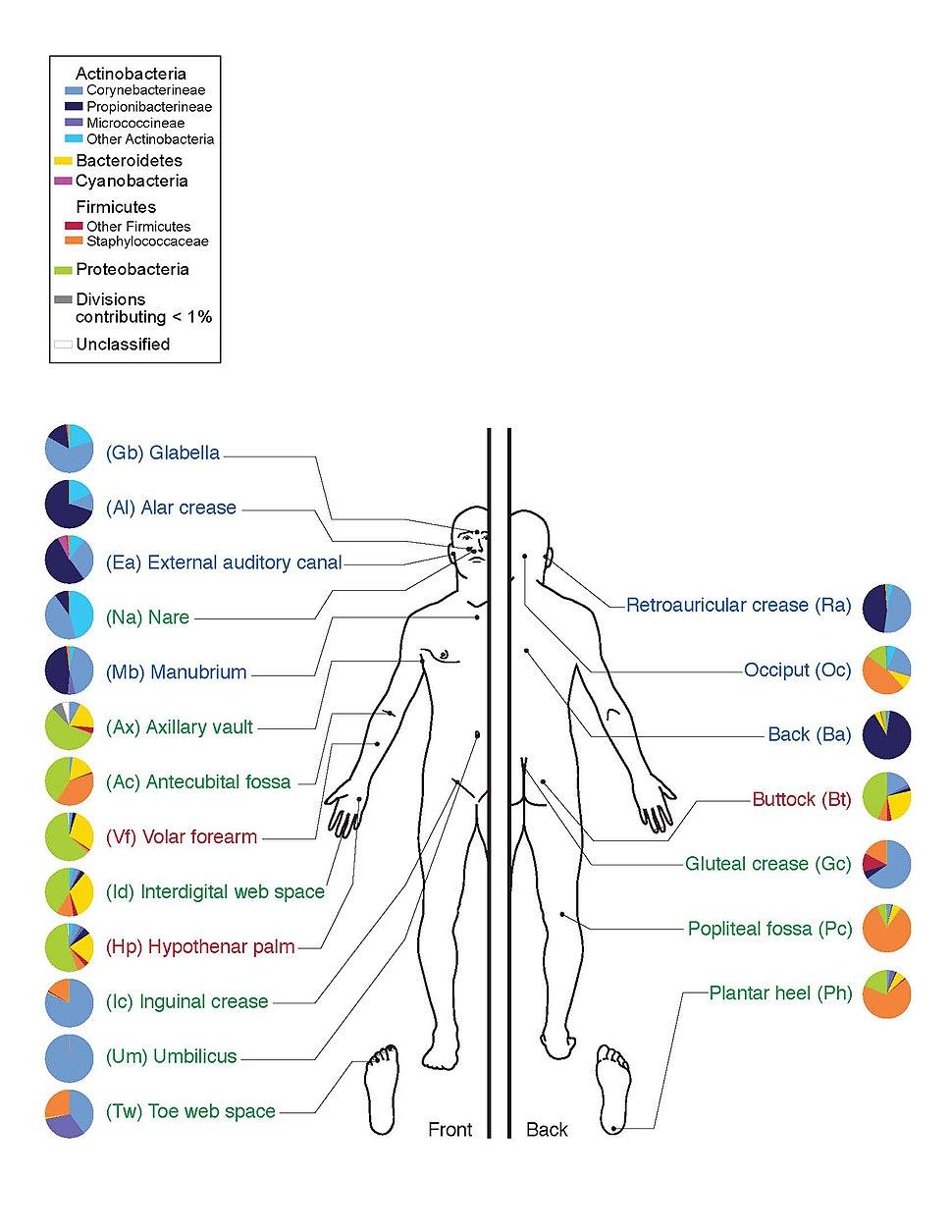 Skin Microbiome20169-300