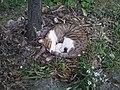 Sleeping cat 2683534.jpg