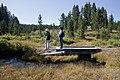 Small creek on trail (3943873741).jpg