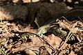 Snake morning.jpg