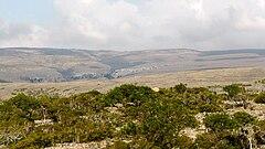 Socotra -Dixam00