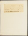 Sorex remifer - 1700-1880 - Print - Iconographia Zoologica - Special Collections University of Amsterdam - UBA01 IZ20900085.tif