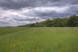 Runnymede - Long Mede pasture at Runnymede viewed from north-west of National trust land