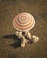 Soyuz TMA-08M landing (09).jpg