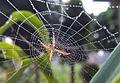 Spider-net.jpg