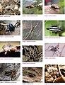 Spiders of Chinnar Wildlife Sanctuary 03.jpg