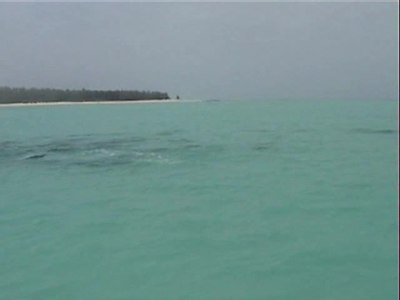 File:Spinner dolphins video.wmv.ogv
