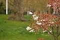 Spring in London (7116668683).jpg