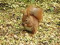 Squirrel-poland.jpg