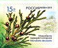 Stamp of Russia 2013 No 1683 Microbiota decussata.jpg