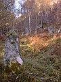 Standing Stones in Fairy Burn Glen - geograph.org.uk - 913008.jpg