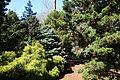 Stanley M. Rowe Arboretum - DSC03297.JPG