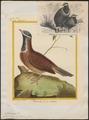 Starnoenas cyanocephala - 1700-1880 - Print - Iconographia Zoologica - Special Collections University of Amsterdam - UBA01 IZ15600253.tif