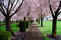 State Capitol Mall in Spring (Marion County, Oregon scenic images) (marDA0039c).jpg
