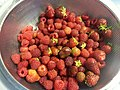 Strawberries and raspberries from the garden (19650824364).jpg