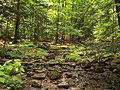 Stream, Glen Haffy Conservation Area.jpg