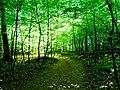 Sunny trees.jpg