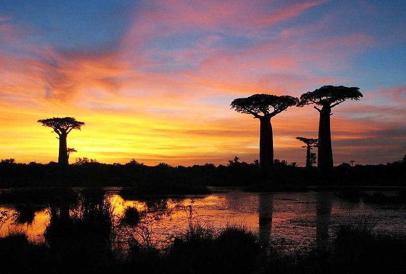 File:Sunset baobabs Madagascar.jpg
