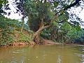 Surat Thani, December 2014 - panoramio (9).jpg