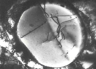 Dislocation - Transmission electron micrograph of dislocations