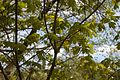 TU Delft Botanical Gardens 53.jpg