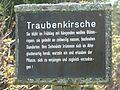 Tafel Hinterzartener Moor 1130072 Traubenkirsche.jpg