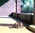 Tana on the terrace (3070179485).jpg