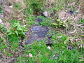 Tanzie Well, also Washing House or St Anne's.JPG
