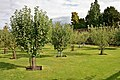 Tatton Park gardens 2009-25.jpg