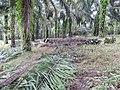 Tayap-Végétation (1).jpg