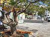 Tazacorte - Plaza San Miguel.jpg