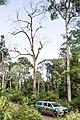 Terra Indígena Cachoeira Seca, Pará (40326427064).jpg