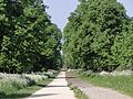 The Avenue from Ham Common to Ham House (5665947827).jpg