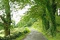 The Lecale Way near Strangford (1) - geograph.org.uk - 928718.jpg
