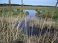 The Marshes NE of Bone's Drove, Holkham - geograph.org.uk - 468238.jpg