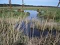 The Marshes NE of Bone's Drove, Holkham - geograph.org.uk - 468238.jpg