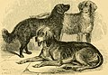 The dog in health and disease - comprising the various modes of breaking and using him for hunting, coursing, shooting, etc., and including the points or characteristics of toy dogs (1872) (20367627993).jpg