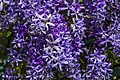 The love of Purple Flowers-1= - Flickr - Sheba Also 44,000+ photos.jpg