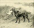 The new book of the dog - a comprehensive natural history of British dogs and their foreign relatives, with chapters on law, breeding, kennel management, and veterinary treatment (1911) (14763799145).jpg