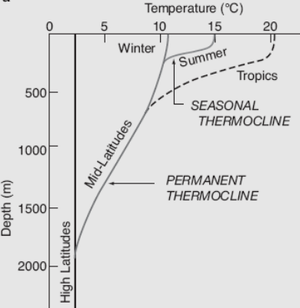 Thermocline - Graph of different thermoclines (depth vs. temperature) based on seasons and latitude
