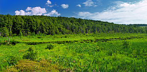 Thompson Township, Susquehanna County, Pennsylvania - Plews Swamp in the Florence Shelly Preserve