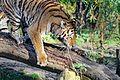 Tiger (15625309502).jpg