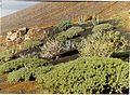 Timanfaya Montana del Fuegos - Lanzarote Photography - panoramio.jpg