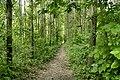 Tisza River - artificially planted forest, floodplain near Algyoe Hungary.jpg