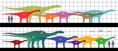 Quaesitosaurus