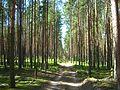Tomsky District, Tomsk Oblast, Russia - panoramio (71).jpg
